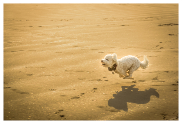 Another One of Max on the Run