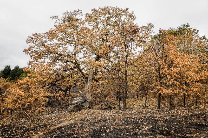 Corvallis Burn