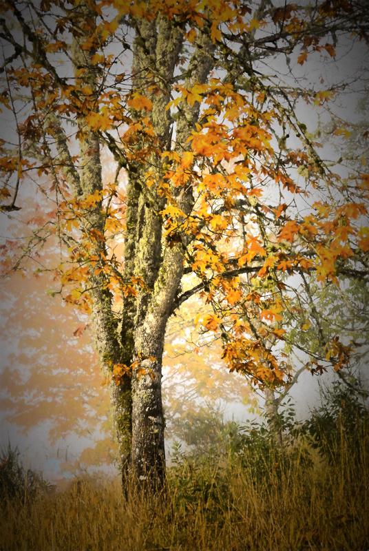 Autumn Fog Chirascuro