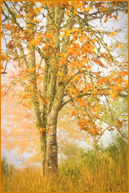 Autumn Fog Pastel