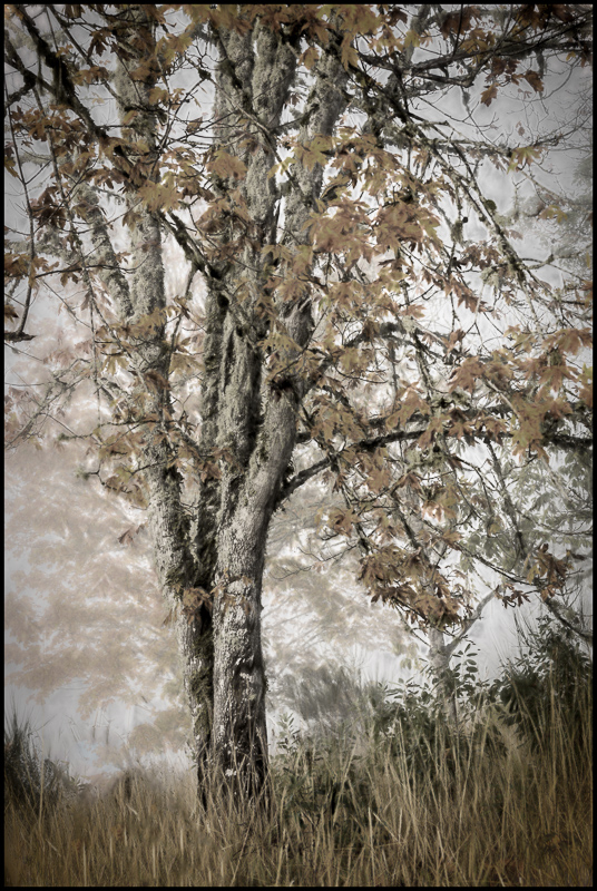Autumn Fog Charcoal