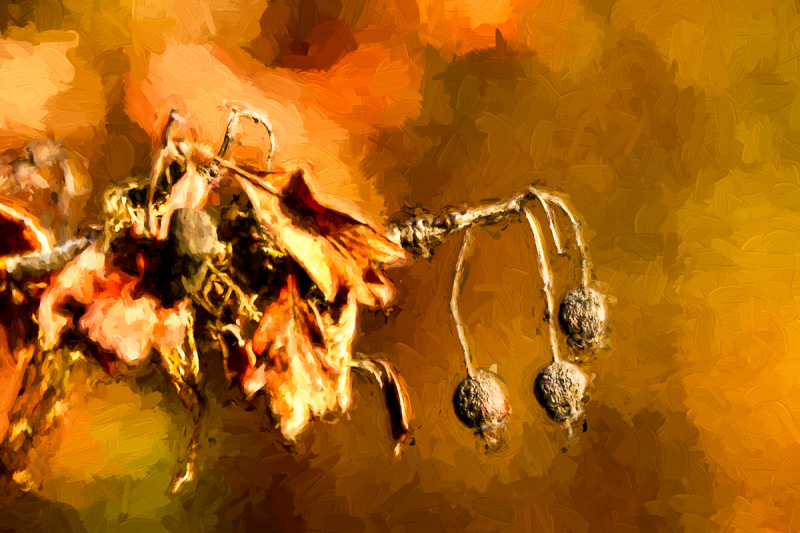 Burned Berries Topaz Impression Impasto