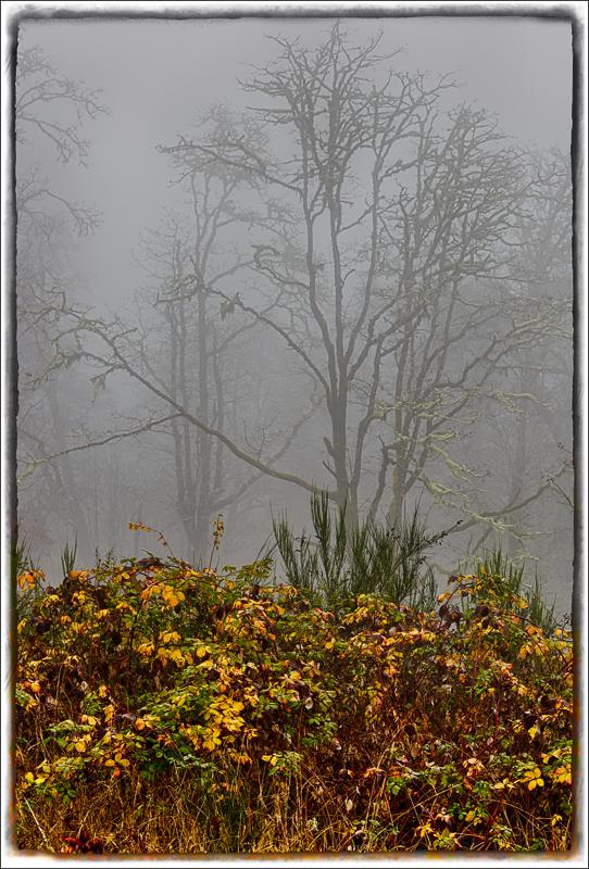 McDonald in the Fog