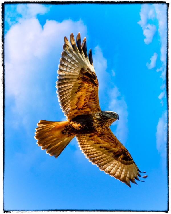 2015 is Your Year to Soar
