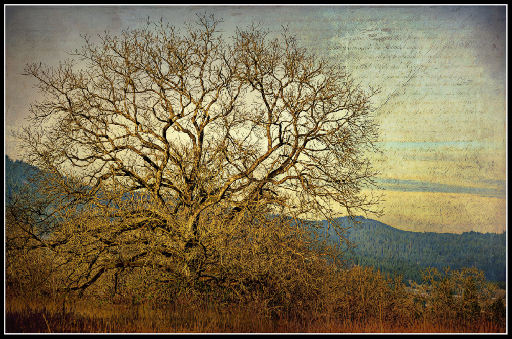 Winter Light (SkeletalMess texture; Topaz preset)
