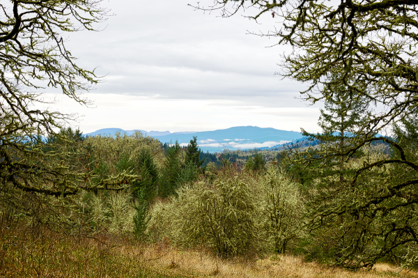 Coastal Range View