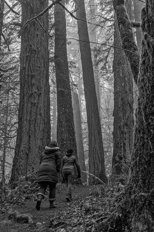 Gray Day Hike BW