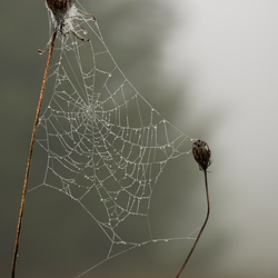 Diamonds in the Fog
