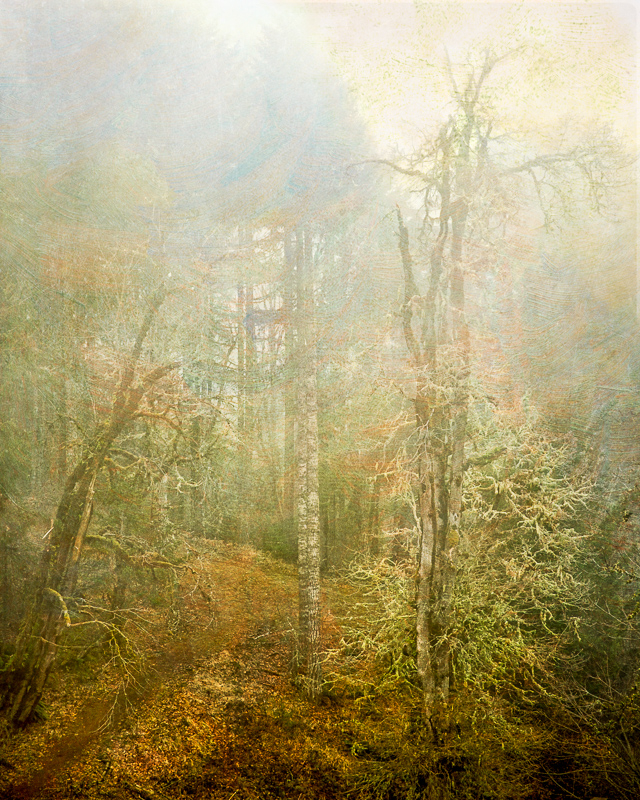 Constant Fog