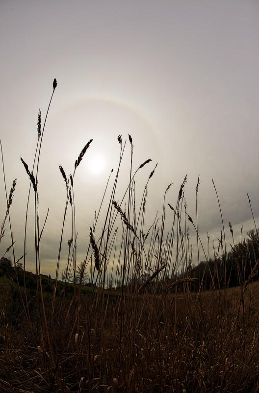 Fisheye Grass