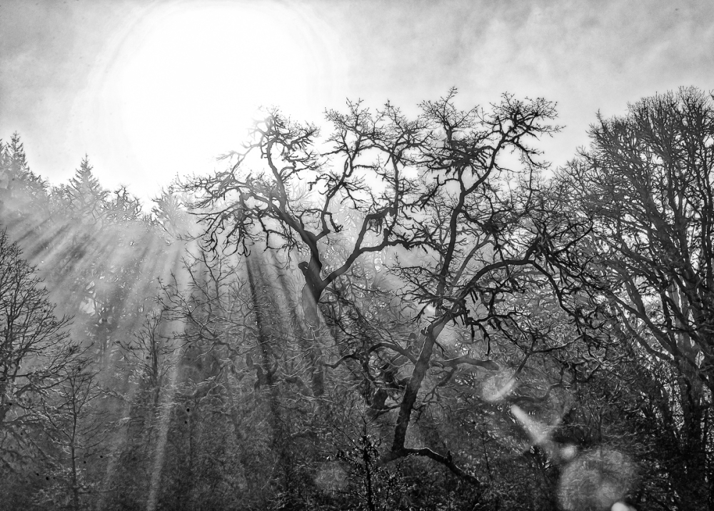 Morning Beams BW
