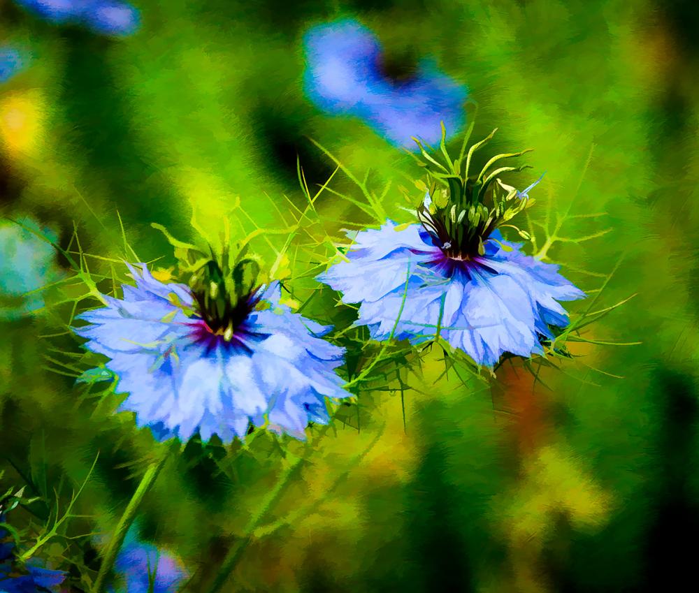 Lovely Blue (Topaz Impression & Simplify)
