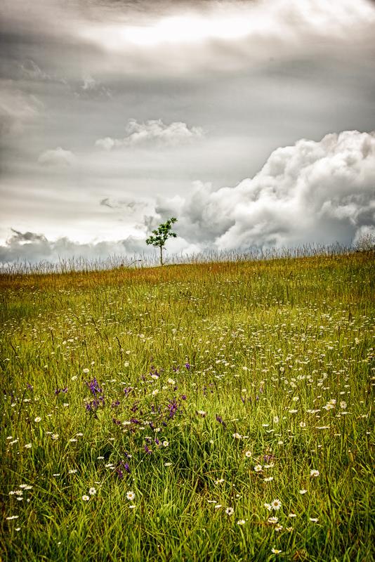 Clouds & Wild Flowers