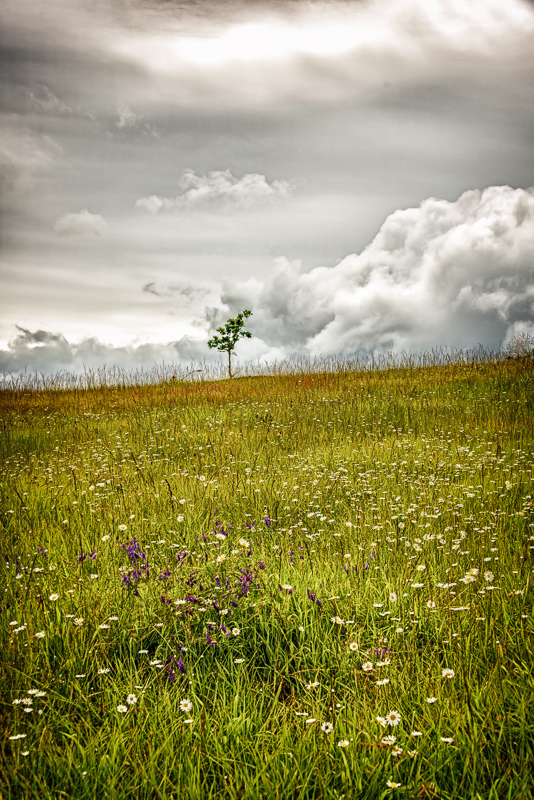 Clouds & Wild Flowers