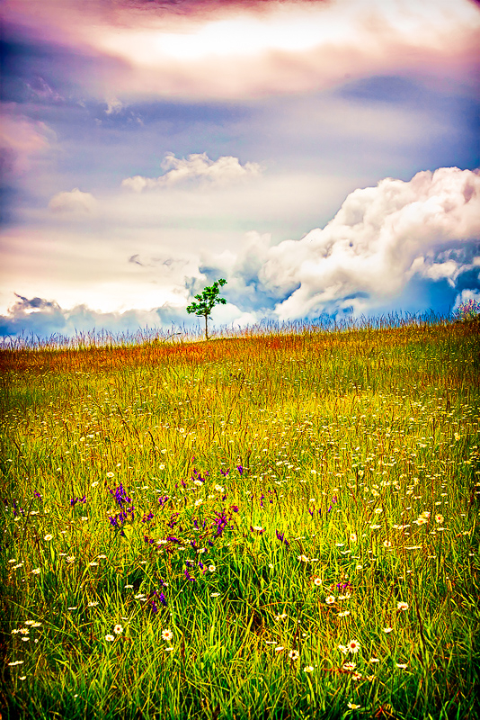 Clouds & Wild Flowers (plug-ins)