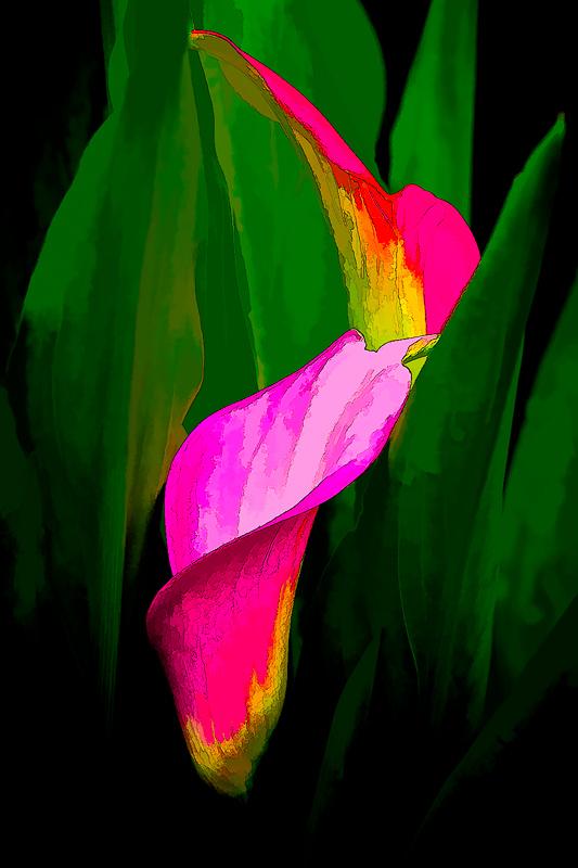 Cala Lilies (Topaz Simplify, Line&Ink)
