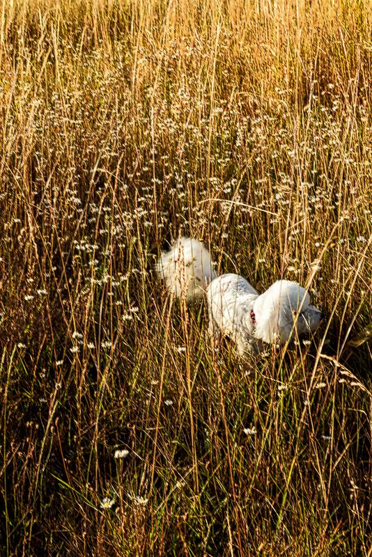 """""""Max in the Grass (Fitton Green)"""""""