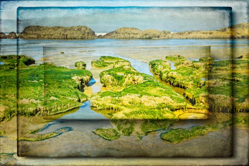 Seaweed (Photomorphis Overlay)