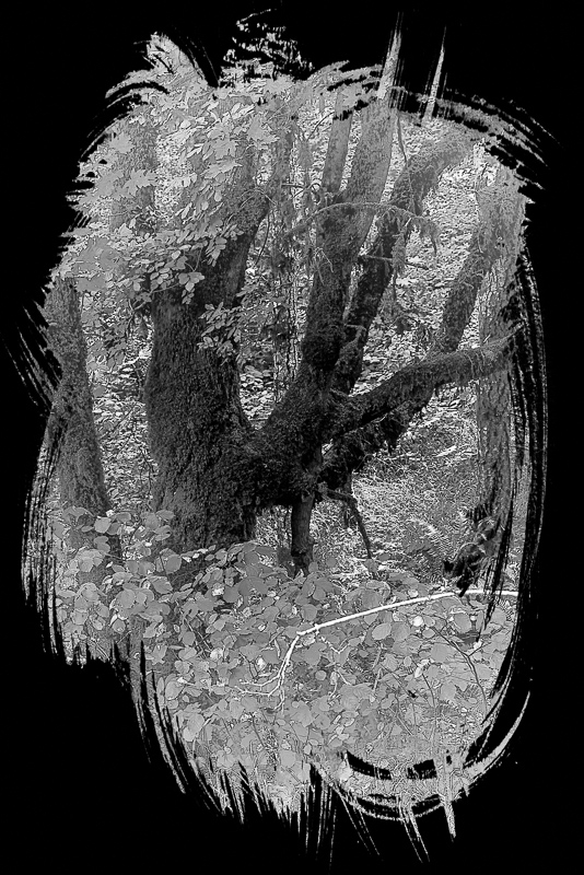 Forest Art BW