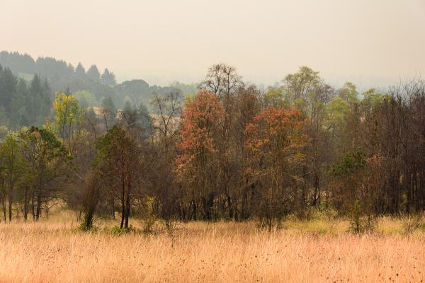 Foggy Early Fall v.2