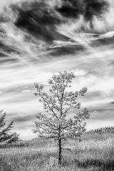 Solitude (Infrared)