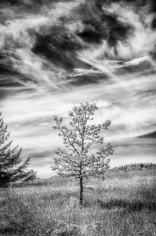 Solitude (Infrared)
