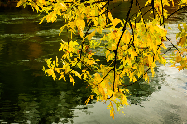 Autumn Leaves Along the Willamette