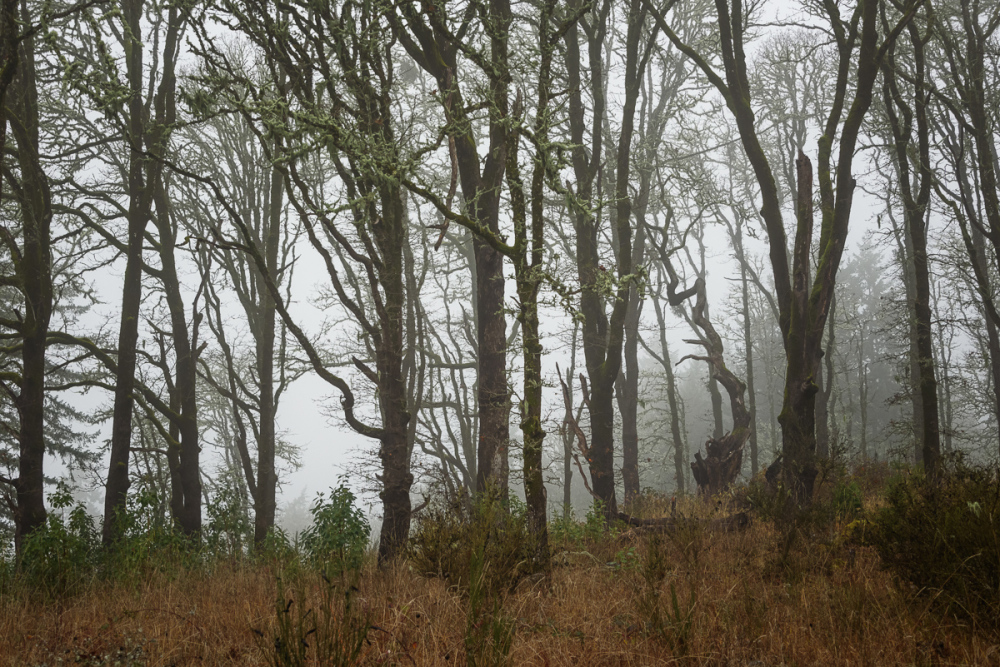 Back to Fog
