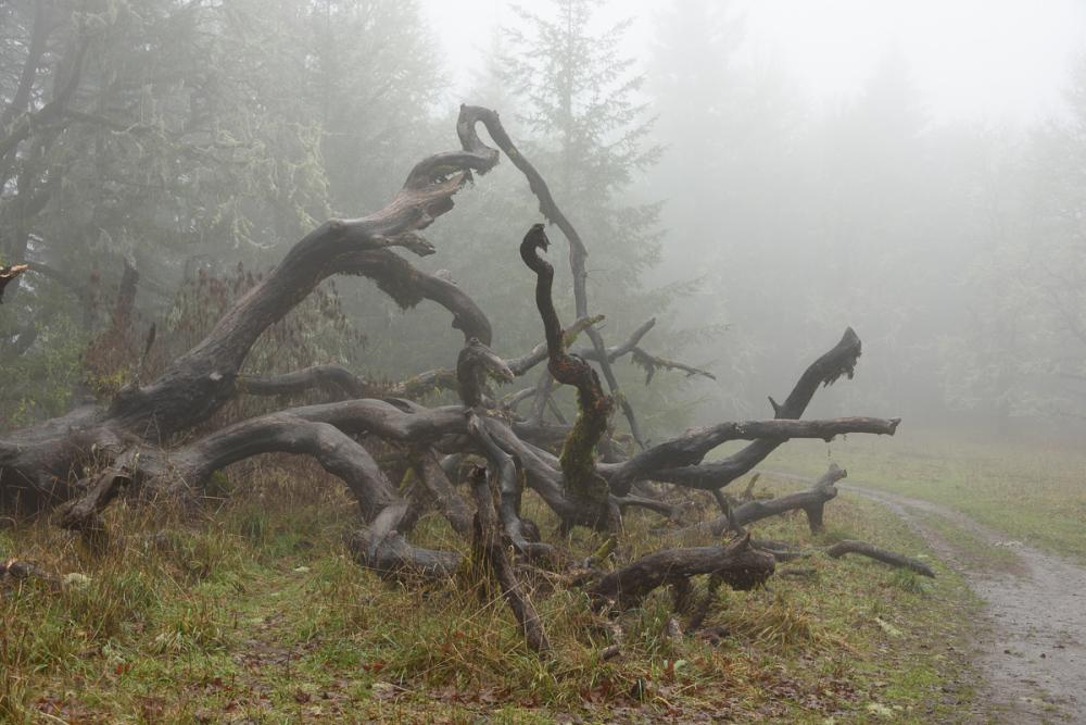 Fog Art