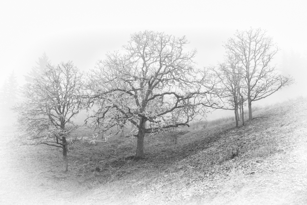 Fitton Green Fog BW