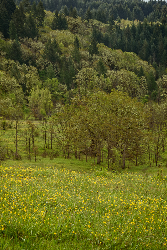 Timberhill Natural Area in the Spring (vertical)