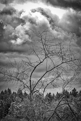 Cloudy Spring Day BW