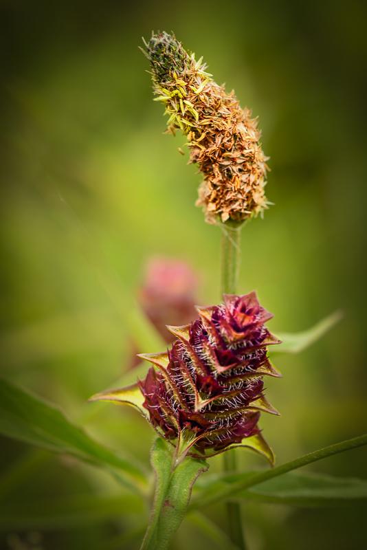 Spring Wild Flower #2