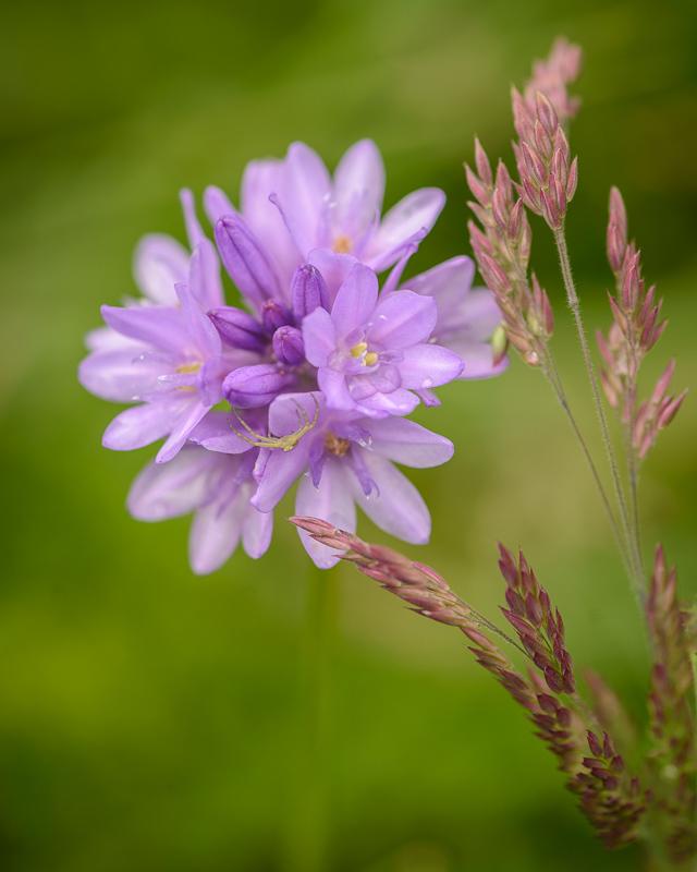 Spring Wild Flower #3