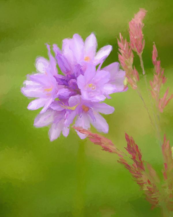 Spring Wild Flower #3 (Monet)