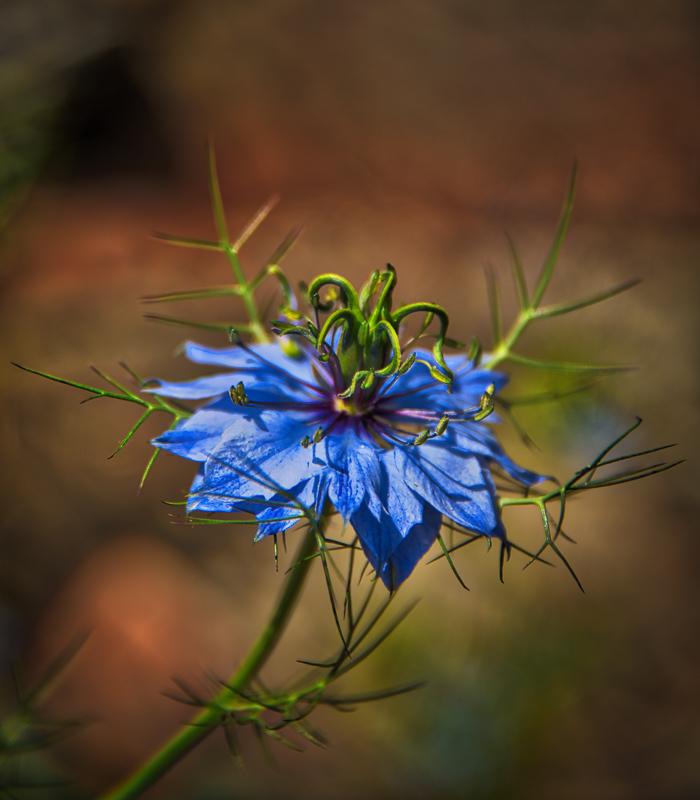 Spring Wild Flower #4
