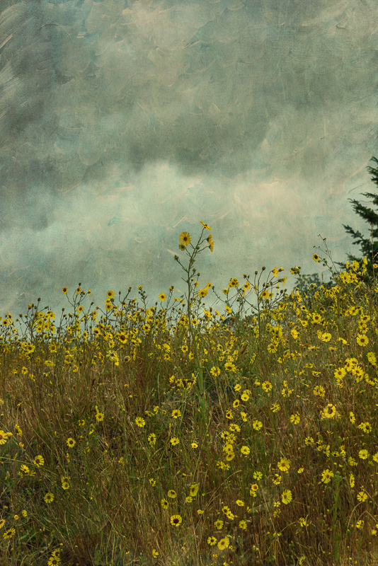 Cloudy Skies (Topaz Texture Effects)