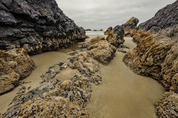 Seal Rock Beach South (color)