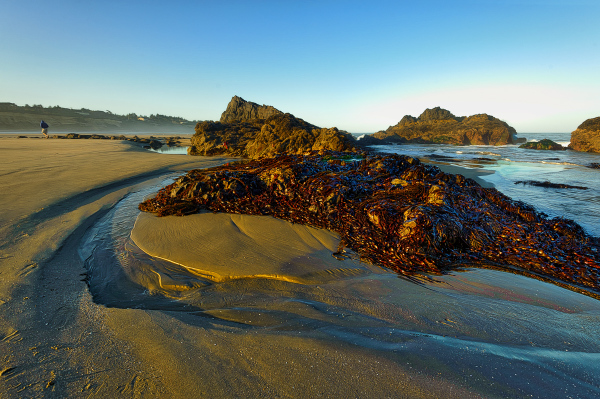 """""""North Seal Rock Beach, Looking South"""""""