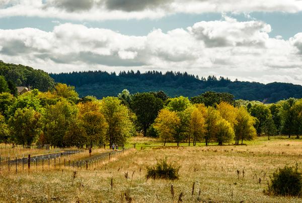 Early Autumn, Bald Hill Farm
