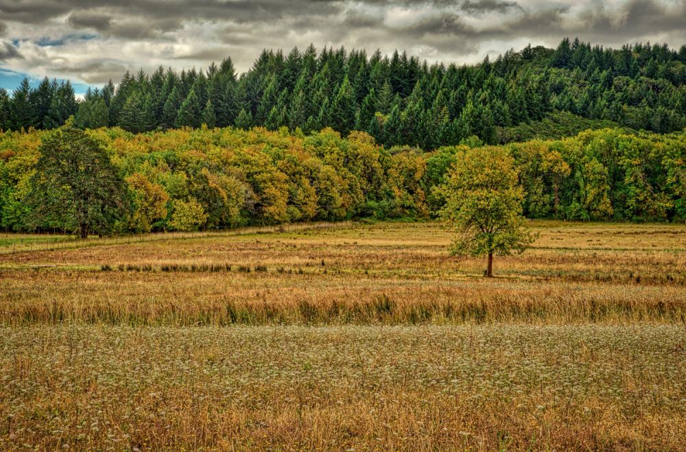 Early Autumn, Bald Hill Farm #2