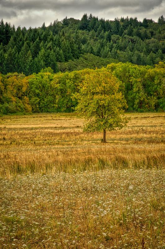 Early Autumn, Bald Hill Farm #3