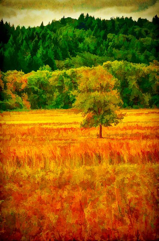 Early Autumn, Bald Hill Farm, Painterly