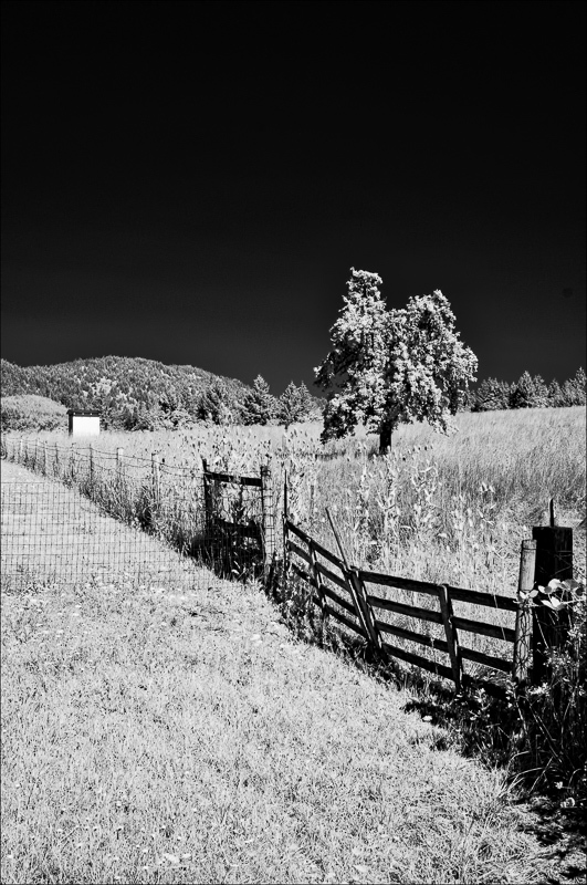 """Old Favorite"" (Infrared)"