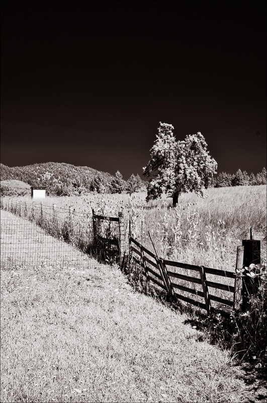 """""""Old Favorite"""" (Infrared, Toned)"""