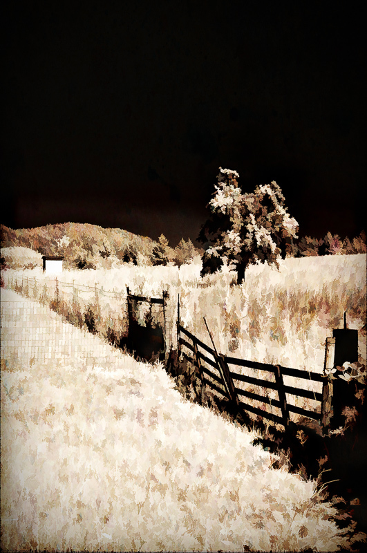 """Old Favorite"" (Infrared, Toned, Painterly)"