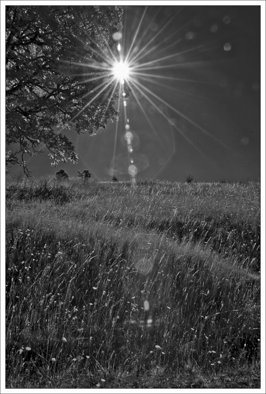 """Sunburst"" (Infrared)"