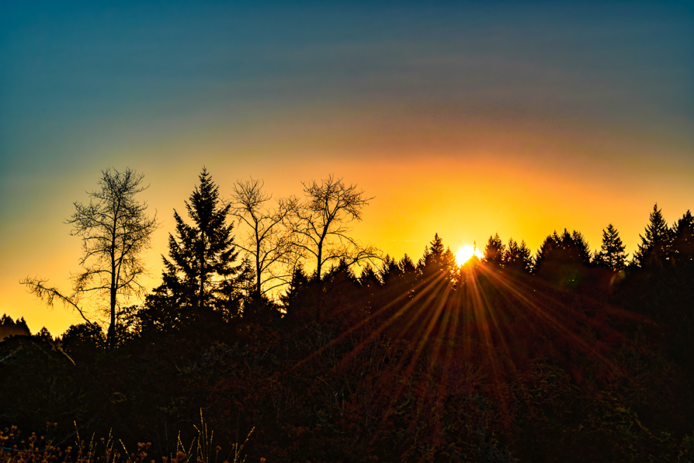 """Timberhill Natural Area Sunrise (LRCC & Aurora)"""