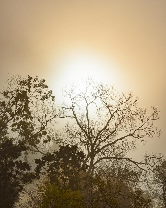 """""""Autumn Fog Returns"""""""