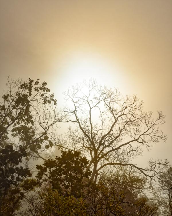 """""""Autumn Fog Returns #2"""""""